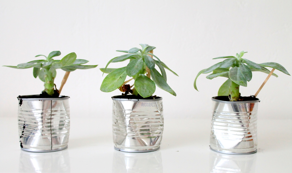 Do it yourself: plantjes in blik