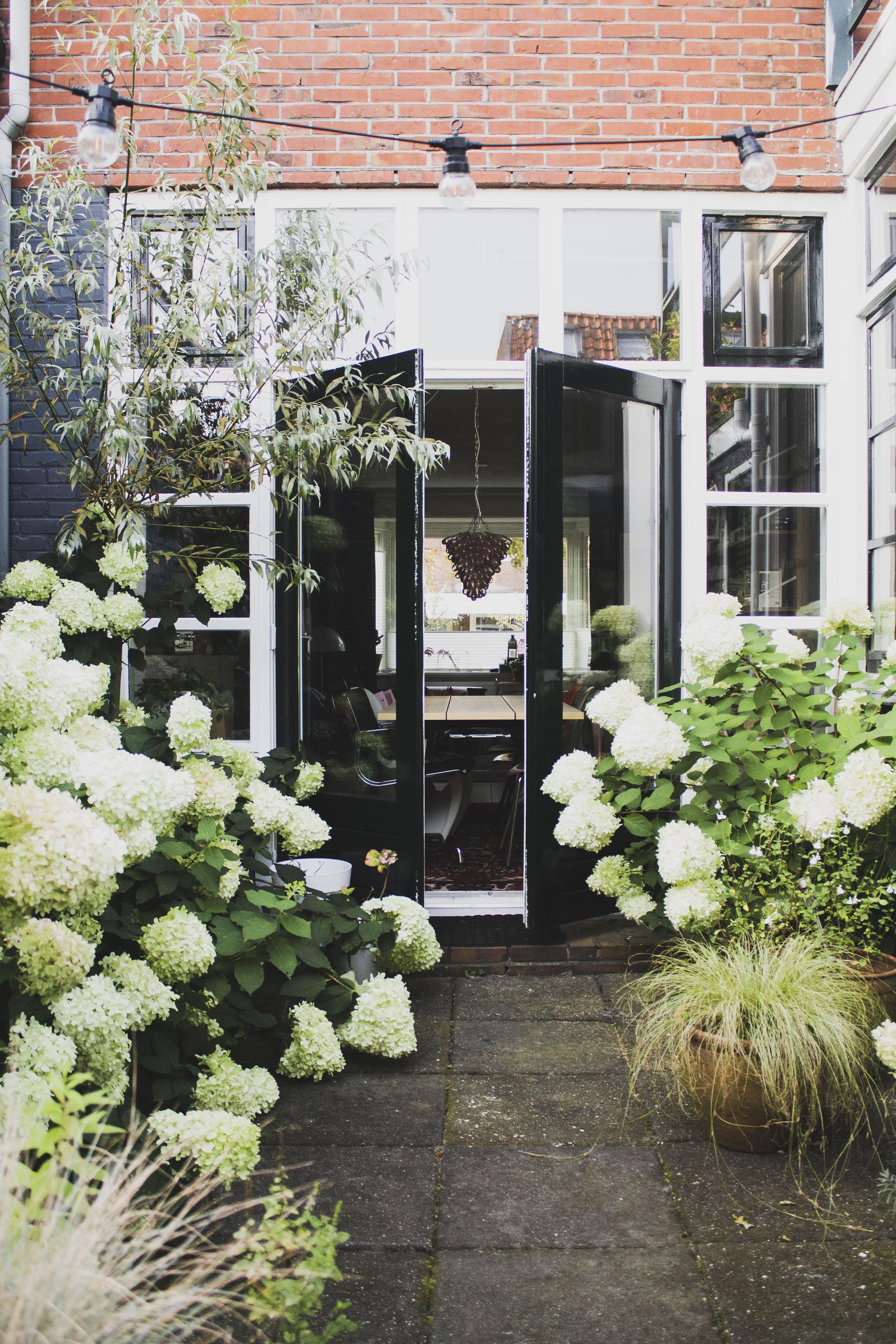 Our hydrangea garden