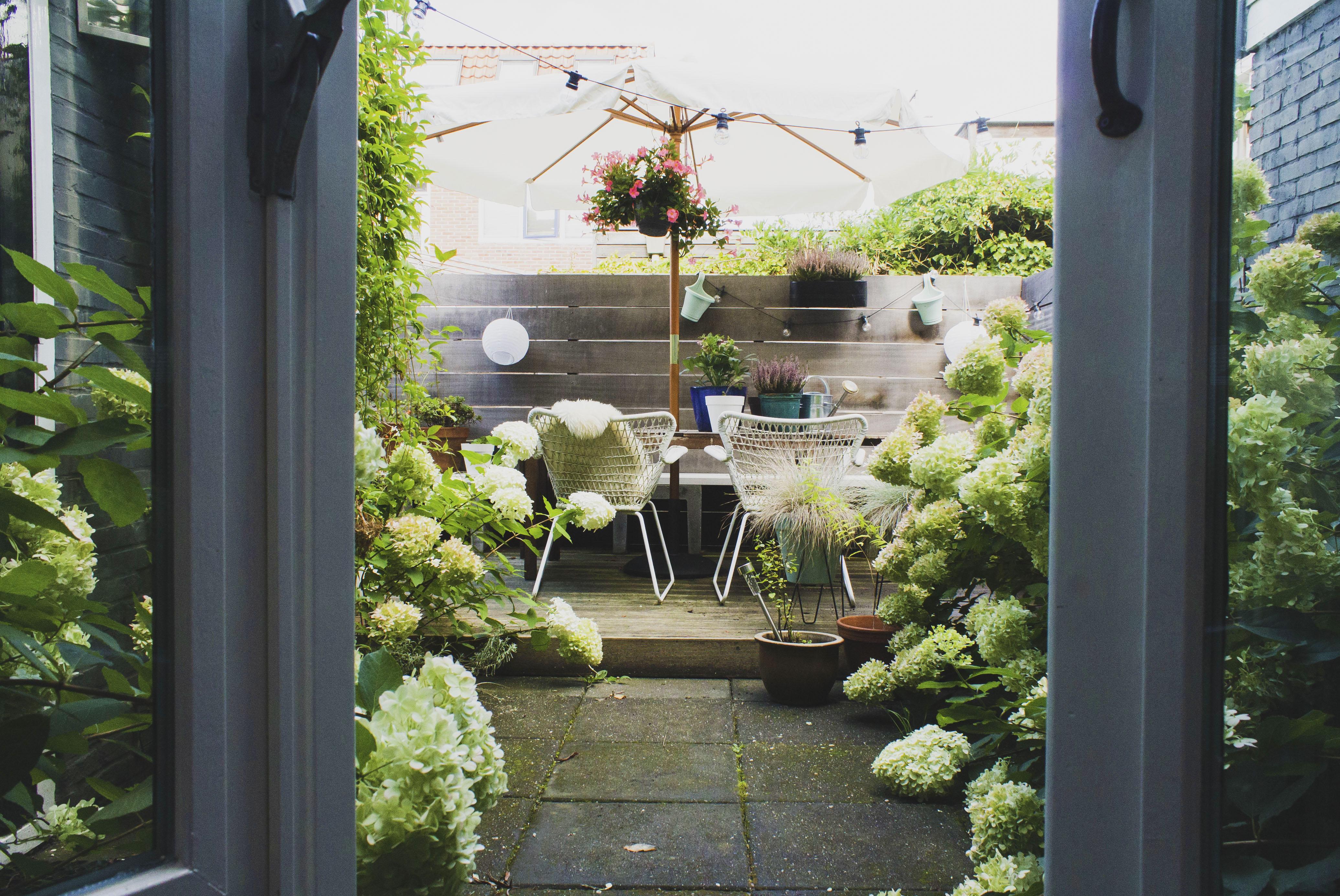 Our garden pt 2